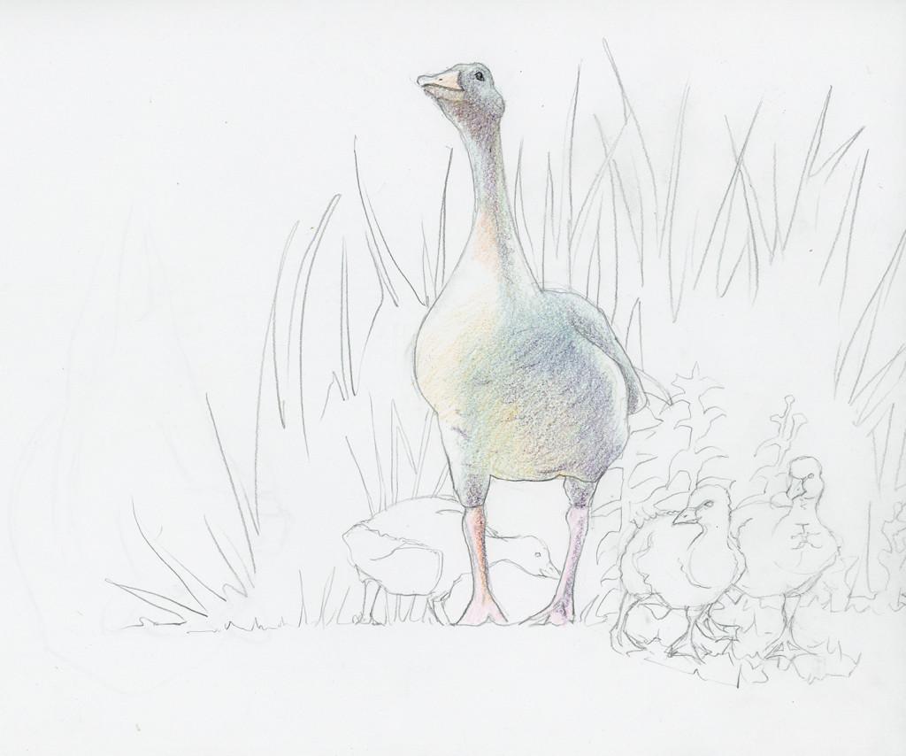 Runde_Goose