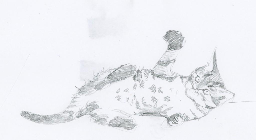 Runde_Kitten