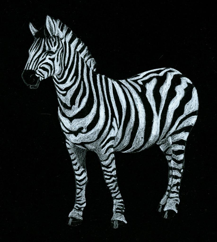 Runde_Zebra