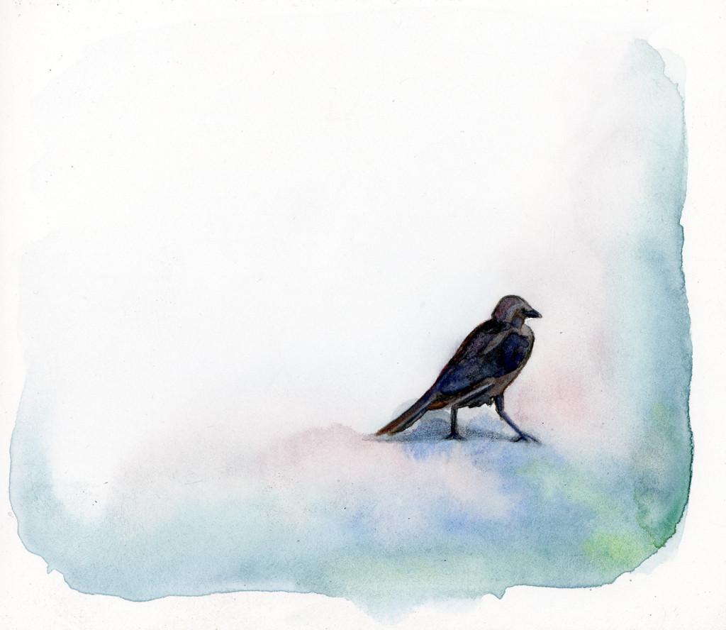 Runde_roadbird